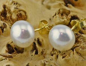 Ohrringe Perle 585 14 K Gelbgold Perlohrstecker